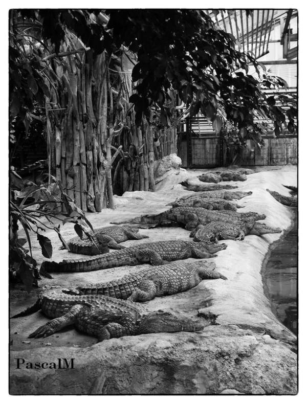 ferme aux crocodile
