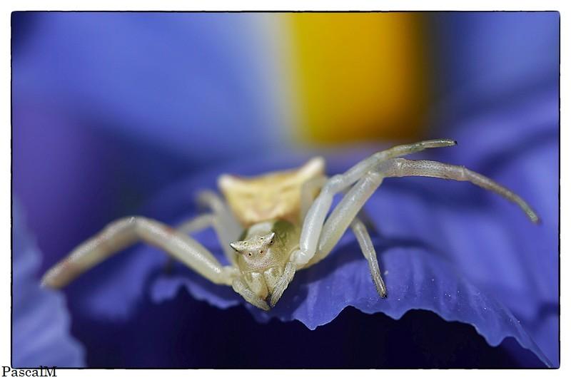 araignée du matin