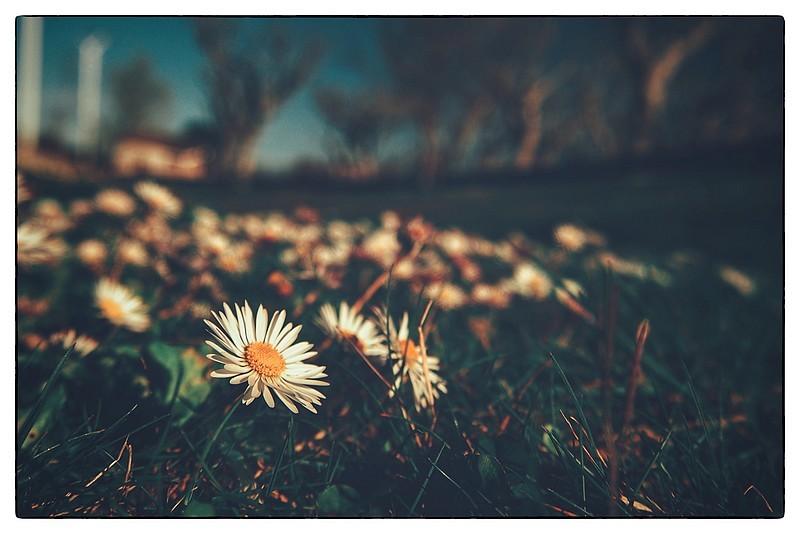 le printemps me manque....