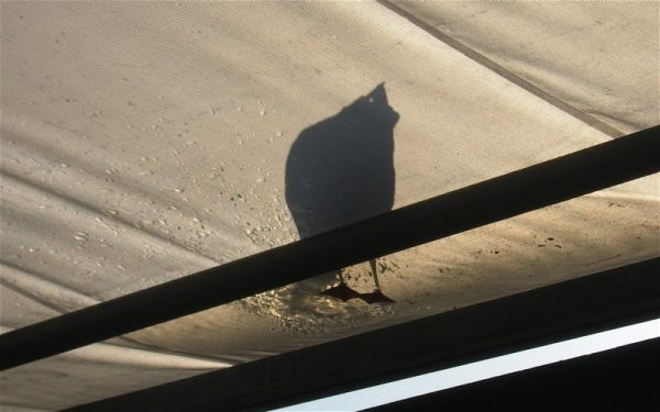 seagul, shadow, bird, Vancouver