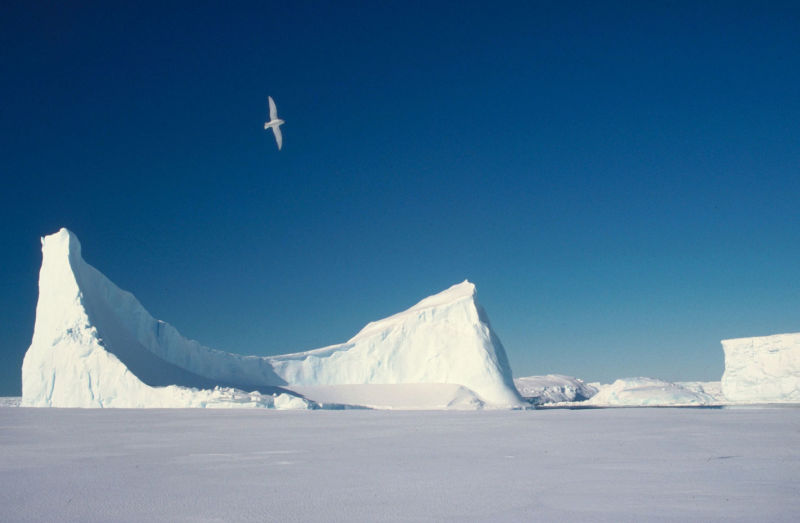 Iceberg and snow petrel