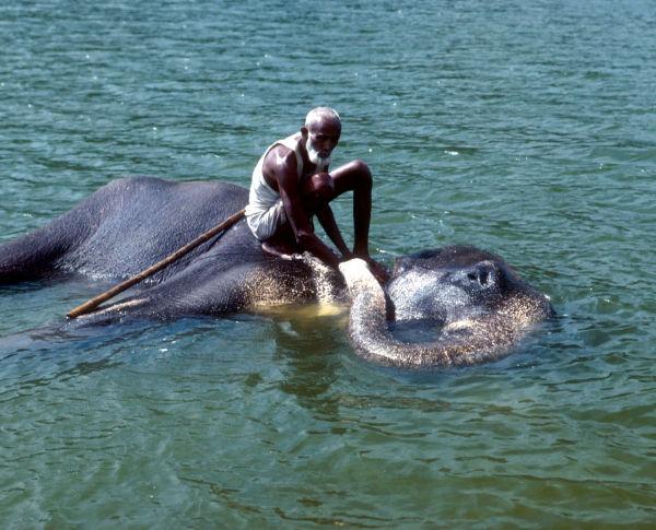 Toilette Elephant