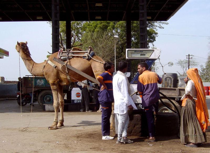 Le plein du chameau !!!!