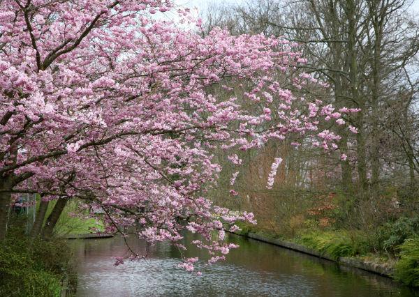 Jardin Keukenhof