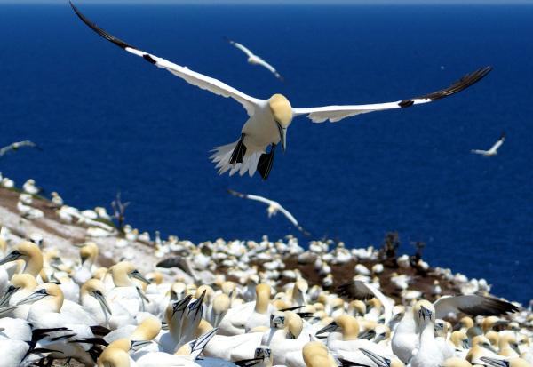 Les fous de l'ile Bonaventure