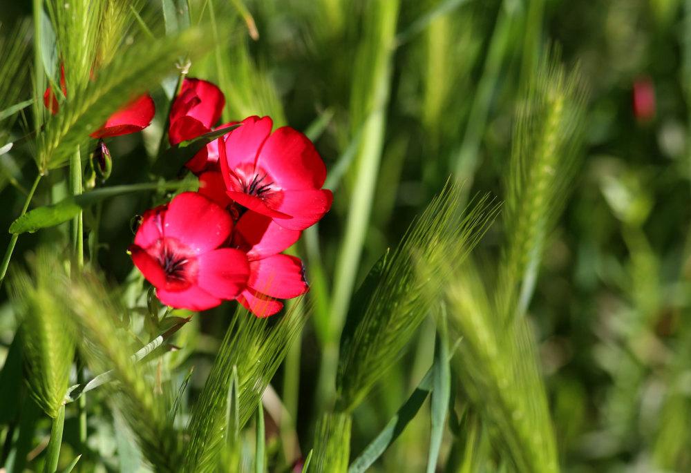 Les prairies catalanes au printemps
