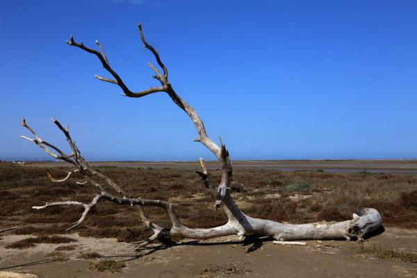 La plage de la Franqui