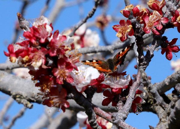 Le printemps en Roussillon