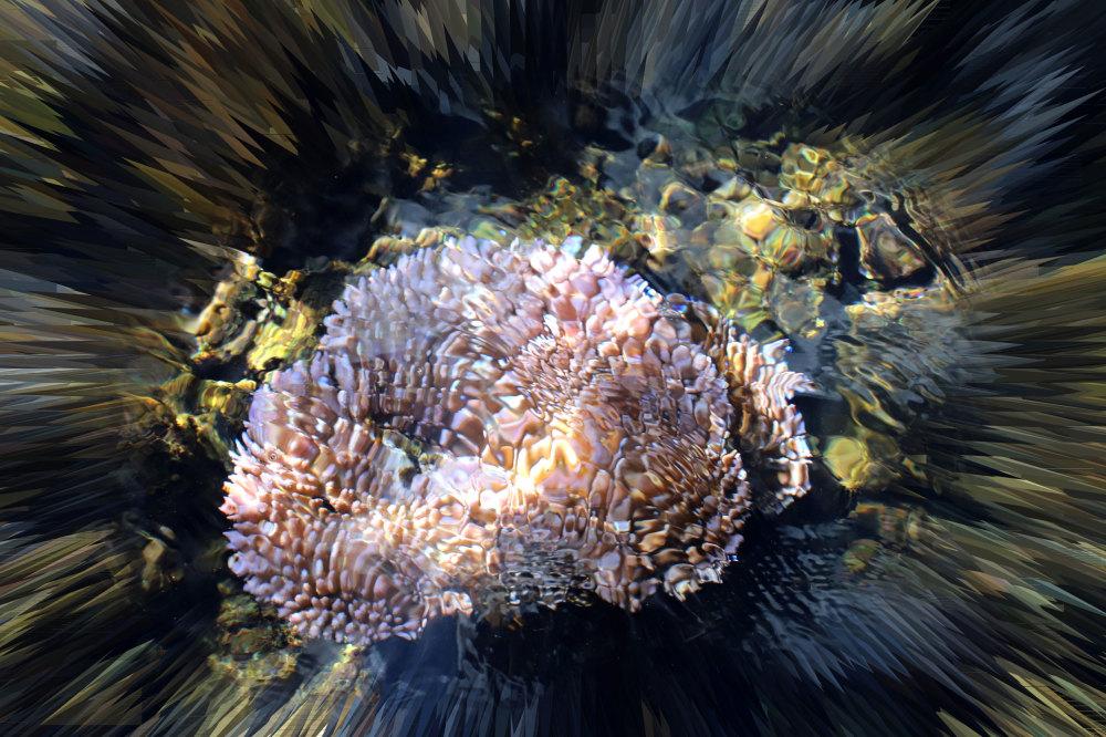 Poisson du lagon de Raiatea