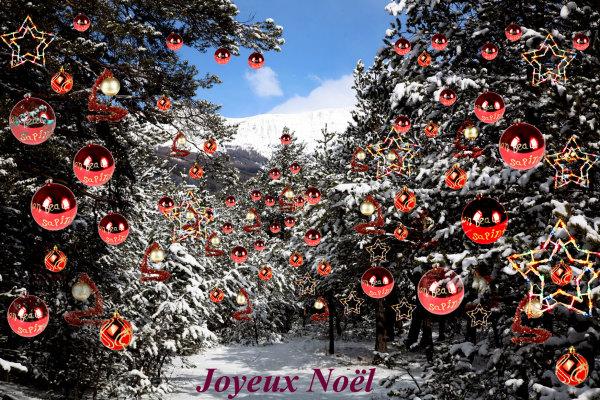 Noël, Sapins, Barcelonette, Alpes