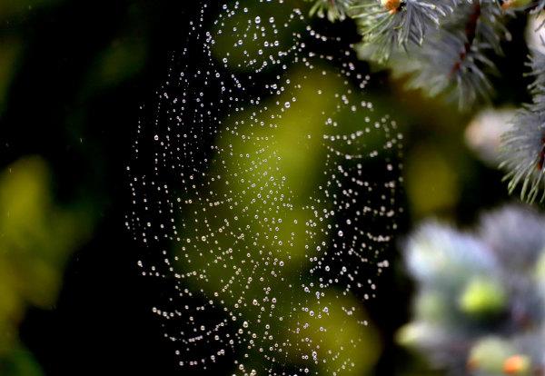 Toile d'araignée de mon jardin