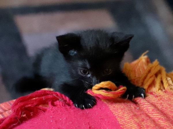 Chatte née le 1er avril en plein confinement