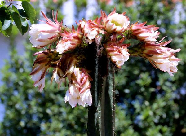 Fleurs des jardins voisins