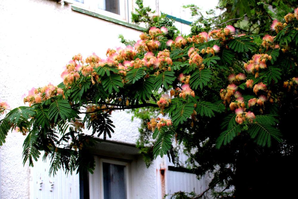 La facade de ma maison au printemps