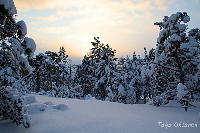 Winter forest 5