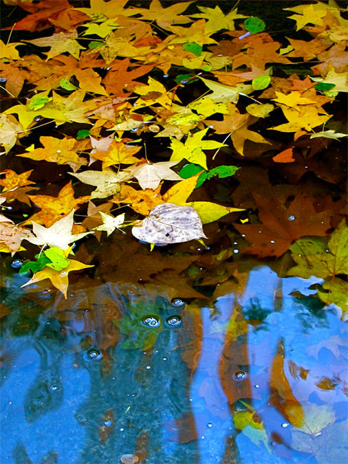 L is for... Leaves in a Fountain