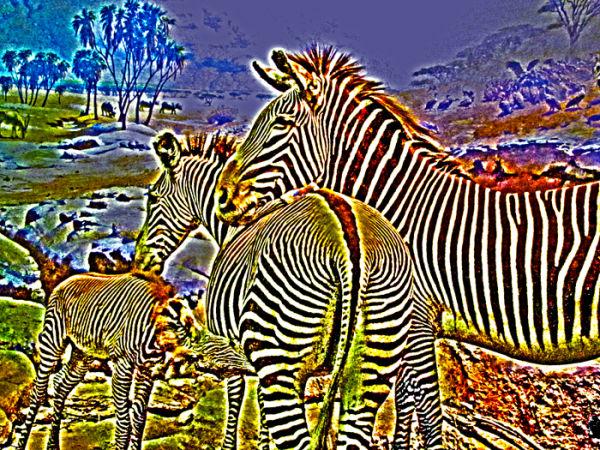Wonderland Zebra
