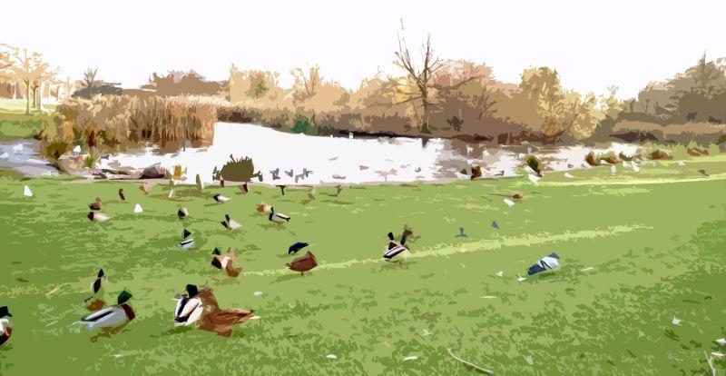 Ducks at a pond in November