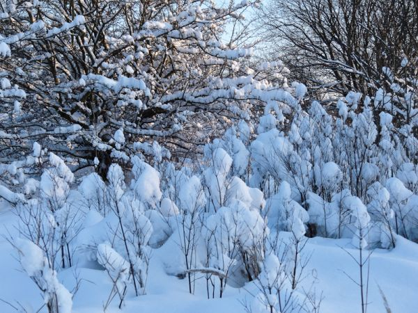 Lots of wonderful snow on December 21, 2010