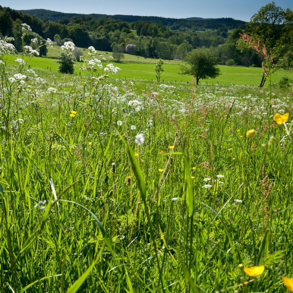 A field in Halland, Sweden