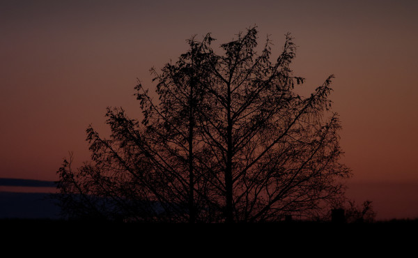 Tree at sundown
