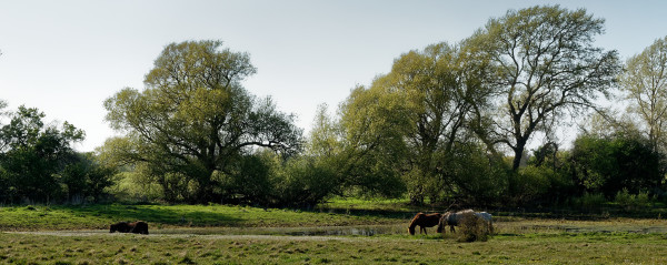 Horses by a lake in springtime