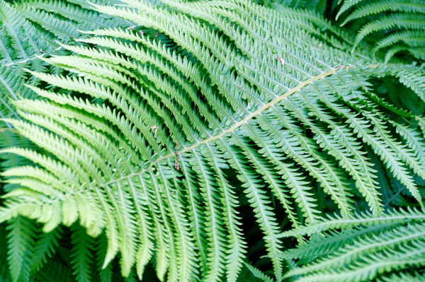 The beauty of ferns