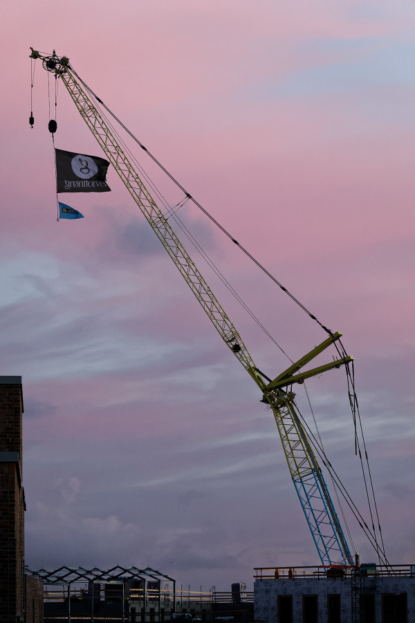 Crane in the early morning light