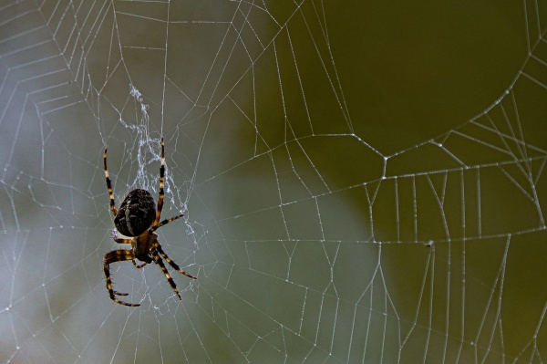 A closer look at our cross spider