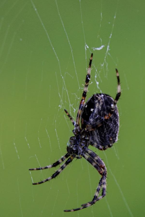 Hello, mrs. Spider!