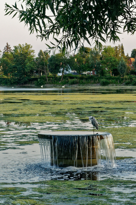 Heron cooling its feet by Damhussøen