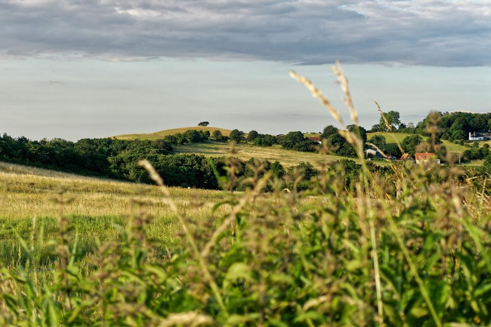 Veddinge Bakker (hills)