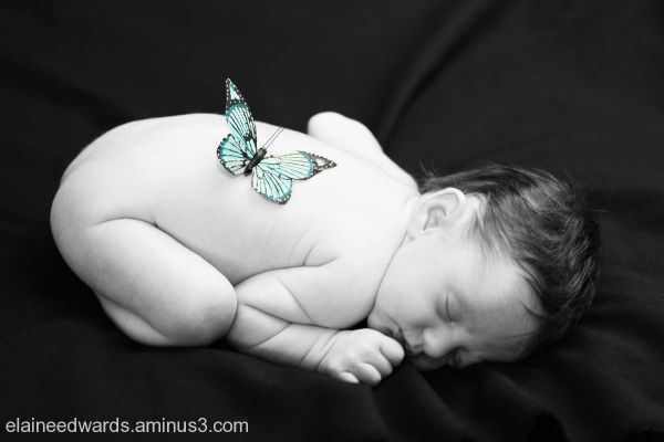 newborn baby infant butterfly photos
