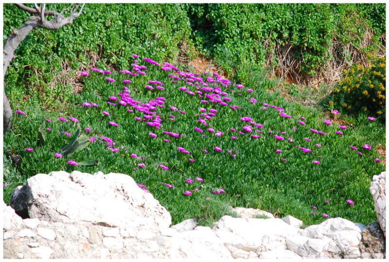 garden near the beach in Cap d'ail