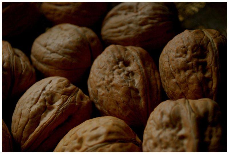 nut in autumn