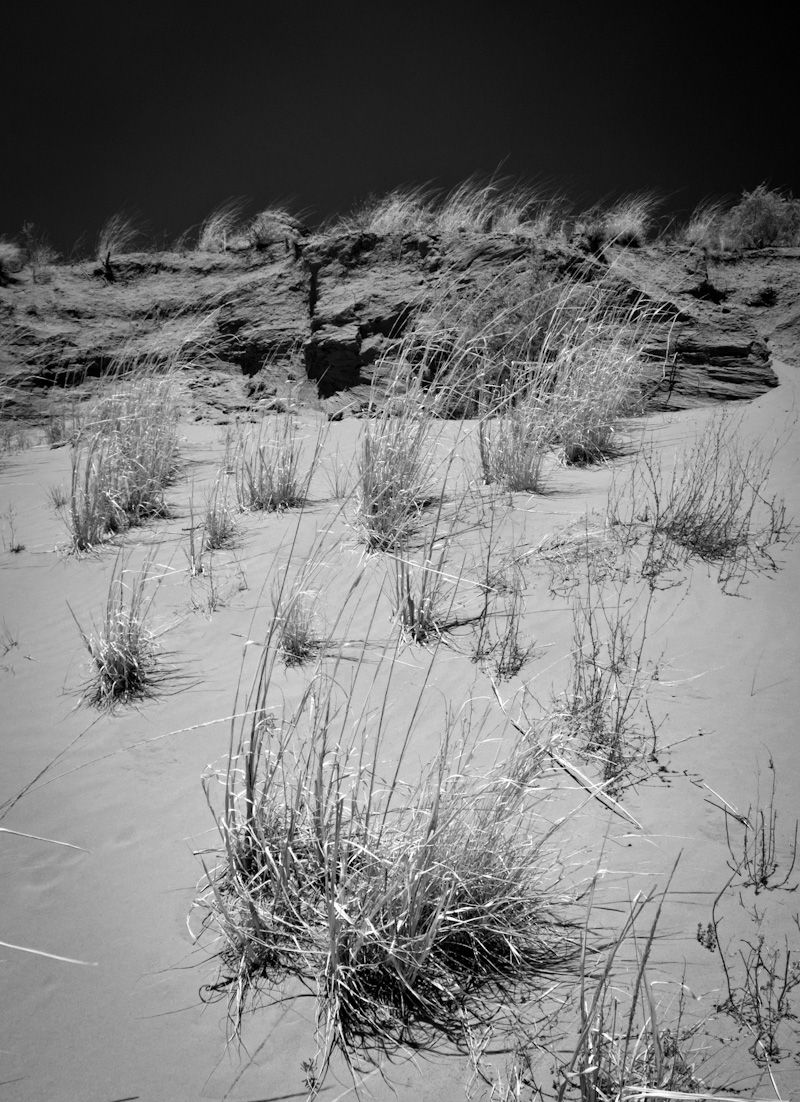 grass in the Acoma valley
