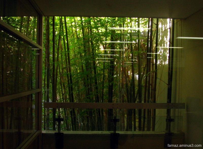 Bamboos in Windows
