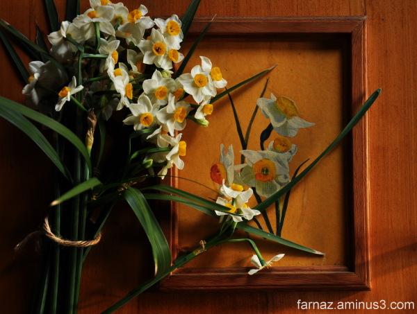 Narcissus  نرگس  درباره نرگس درباره ی الی