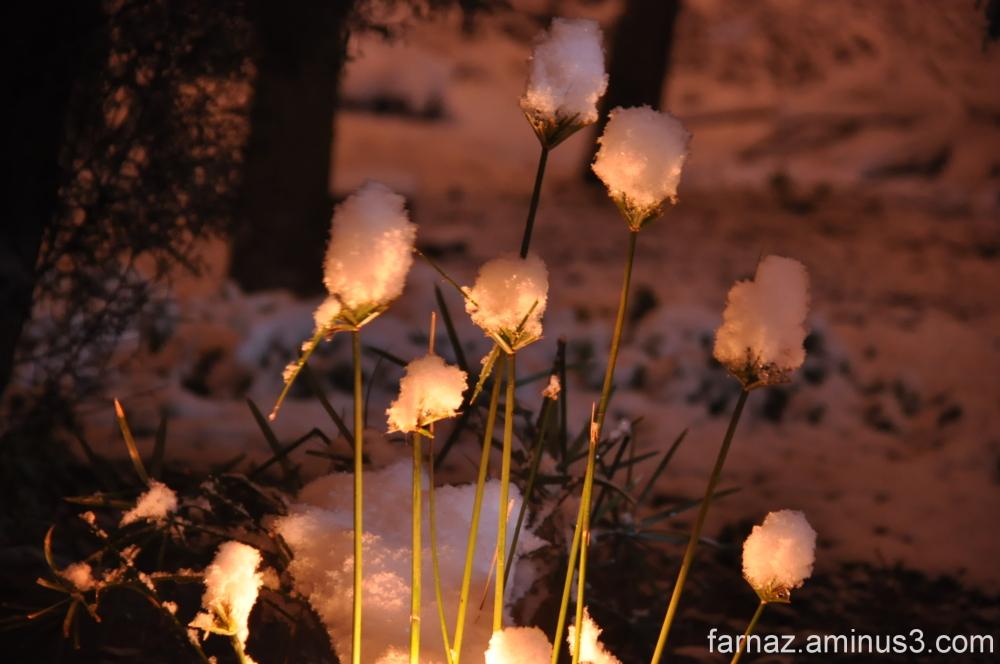 شبهای برفی گرگان  Gorgan - Iran  at night