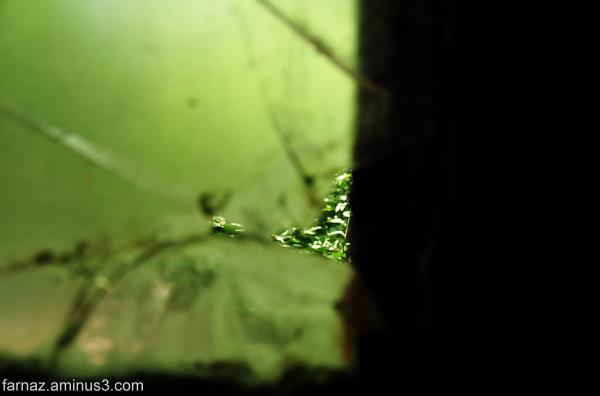 Magical Nature  2