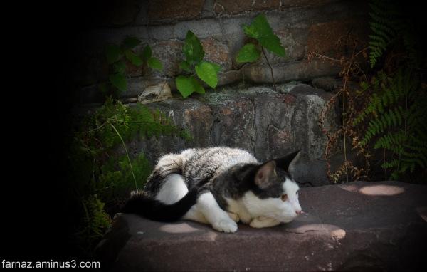 Husky & Pity