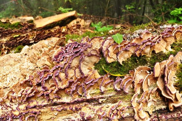 Autumn is Purple  1/5