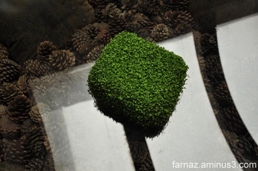 nowruz  نوروز