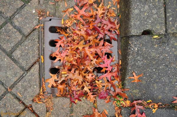 Toward Autumn  5