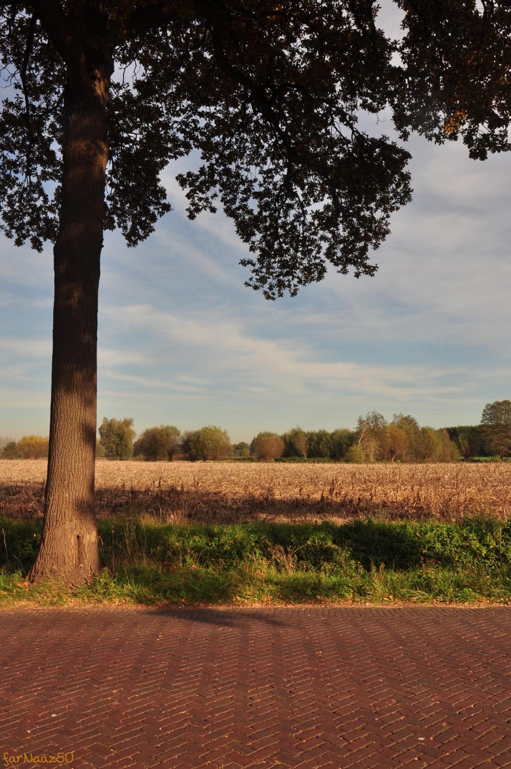 Toward Autumn  6