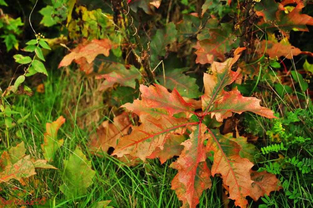 Toward Autumn  8