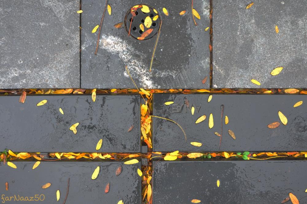 Toward Autumn 10