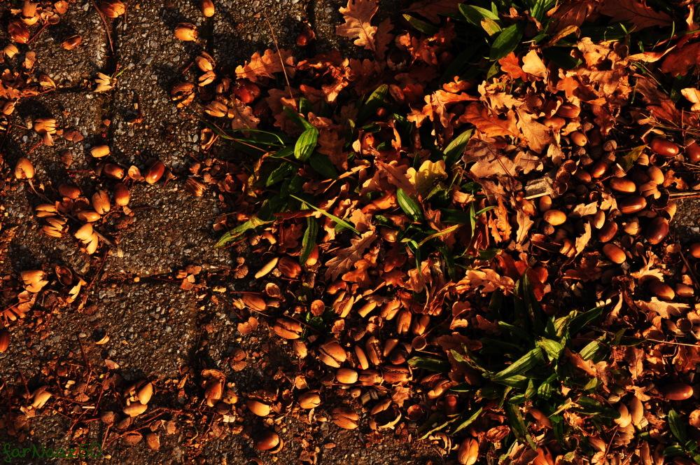 Toward Autumn 18