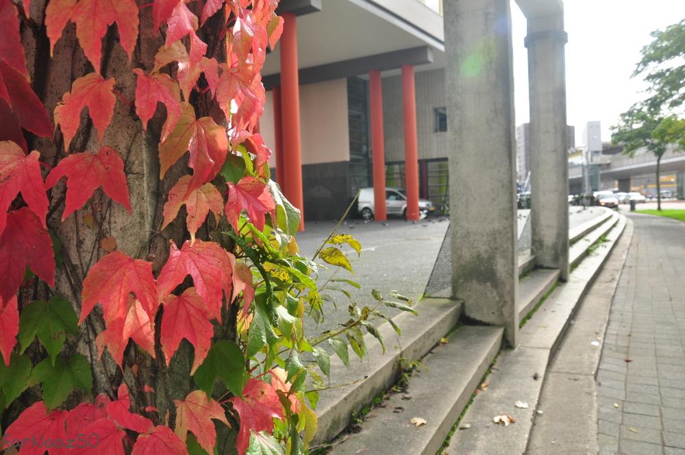 Toward Autumn 26