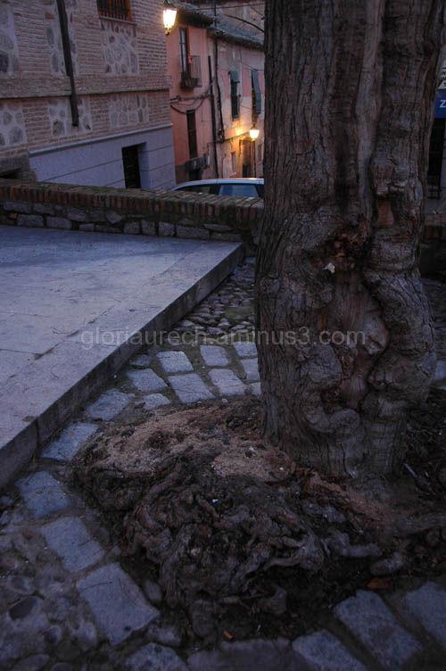 A tree in a village square
